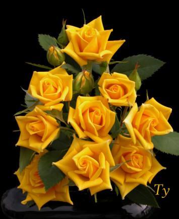 The Basics Of Rose Growing 101 Rose Growing Tips